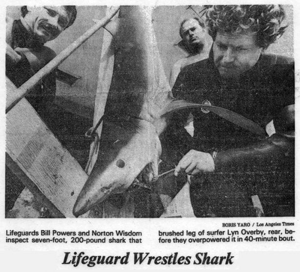 """""""Lifeguard Wrestles Shark, Gets Sore Nose"""" By BORIS YARO, LA Times Staff Writer... Shark bites are rare along the California coast, almost as rare as what happened to county Lifeguard Norton Wisdom, 23, in a bout with a 200-pound blue shark off Topanga Beach. It punched him in the nose. But Wisdom wasn't complaining. No one else was hurt by the seven-foot monster and he and his partner. Bill Powers, finally managed to beach the thing after an hourlong battle. Wisdom said he and Powers saw the shark Swimming near surfers as they were opening. their lifeguard tower Tuesday morning. """"His head was above water and his mouth was open,"""" Wisdom said. """"He was in kind of feeding frenzy but he didn't have any object in particular that he was attacking. It was apparent that something was wrong."""" Surfer Lyn Overby, 29, of Topanga, had already reached that conclusion. Overby said the shark had brushed against his leg--so he """"just started paddling in, quickly."""" Overby emerged unscathed, and Wisdom and Powers called for a boat. Told no boat was near enough, they entered the water. Powers with a three-foot pole with a gaff hook on the end and Wisdom with a spear gun. They paddled out on surfboards and tried to get the shark to go away, but the shark wouldn't cooperate. First it turned on Wisdom, knocking the butt end of the spear gun into his nose. It turned on Powers when Powers hit it with the gaff hook, forcing Wisdom to fire the spear gun to distract it. The spear just bounced off the shark's hide. For the next 40 minutes the two men wrestled with the shark in shallow water. Once, the shark disappeared. That worried Wisdom. """"It's one thing,'' he said, """"when you can see where his head is..."""" Finally they gained a solid footing on the beach and--with the aid of spectators--pulled the shark out of the water and tied it to one of the lifeguard tower's support posts. After they caught their breath, the two lifeguards discovered the probable reason for the shark's strange behavior. So"""